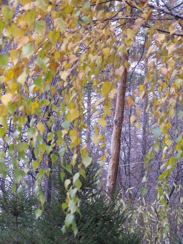 Уж небо осенью дышало...Зима в окошко постучала - Елена Кузнецова