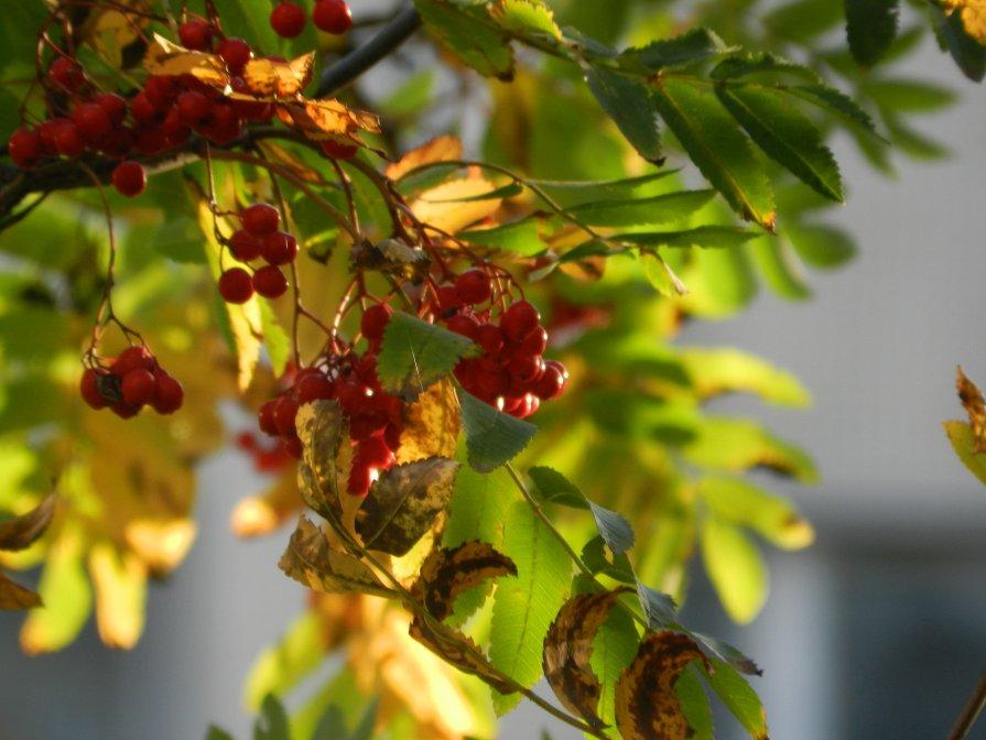 Осень за окном - Владимир Лагажан