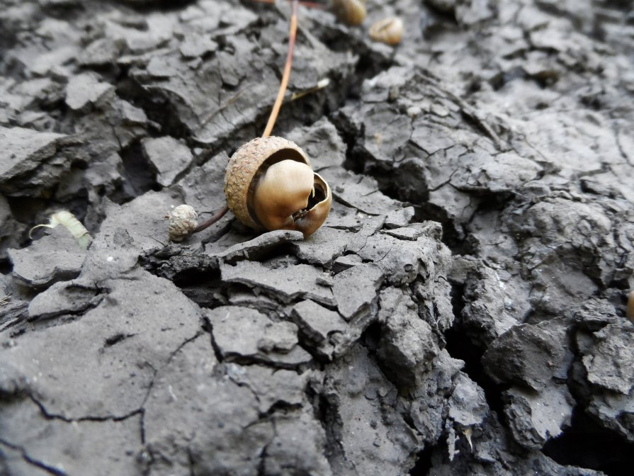 земле нужен крем) - Дарья Коротышева