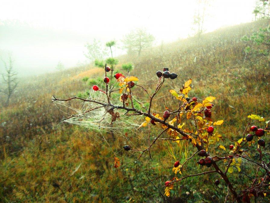 Шиповник в тумане... - Владимир Уваров