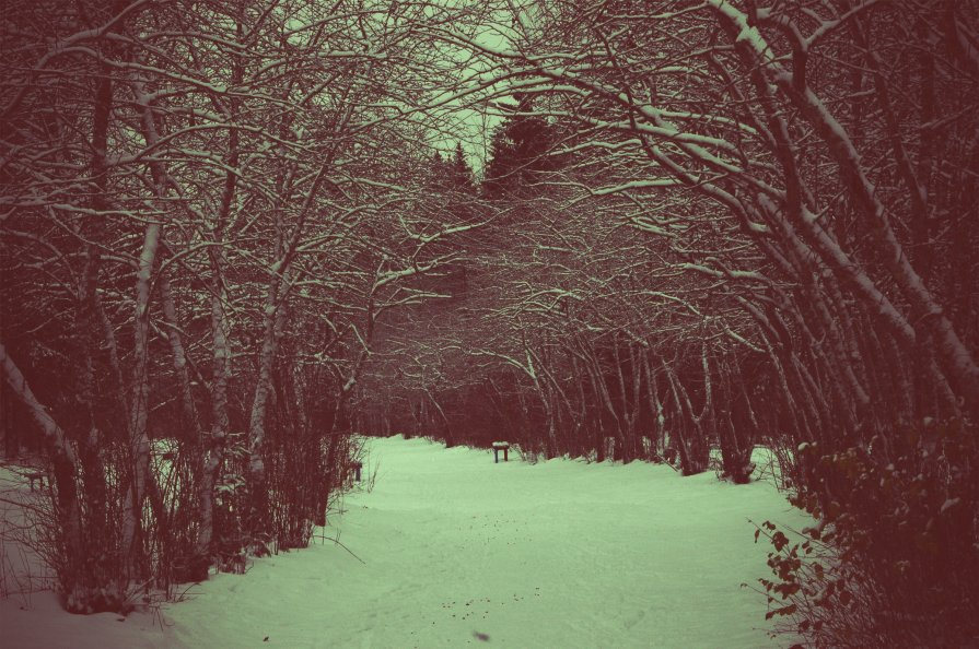 Winter Forest - Натали V