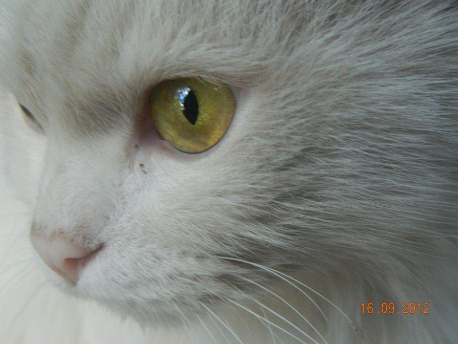 белый кот - Мария Шумаева