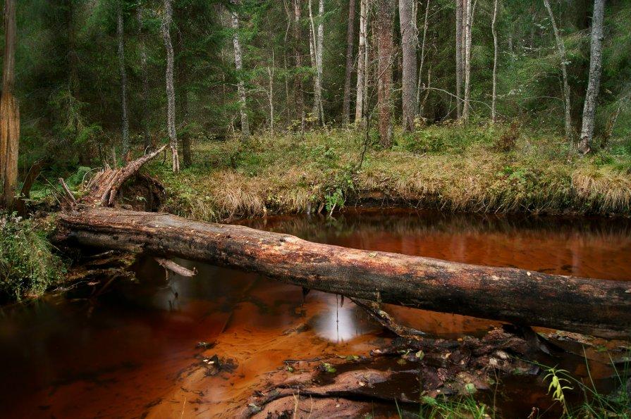 В лесу - Екатерина Тумовская
