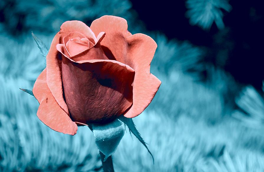 Sinful Flower - Олег Ионичев