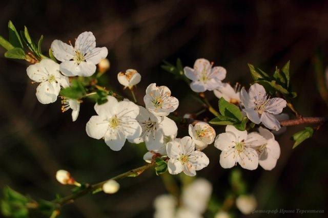 Весна, весна... - Ирина Терентьева