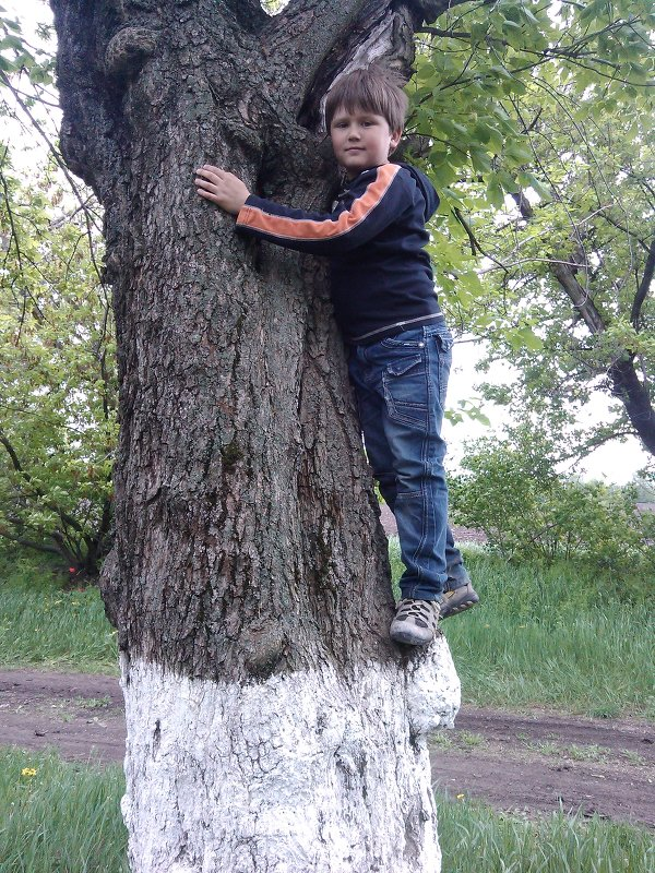 дерево идети - filya zub