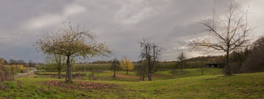 apple-tree - Александр Голубев