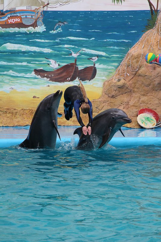 Дельфины и русалка! - Николай Кононцев