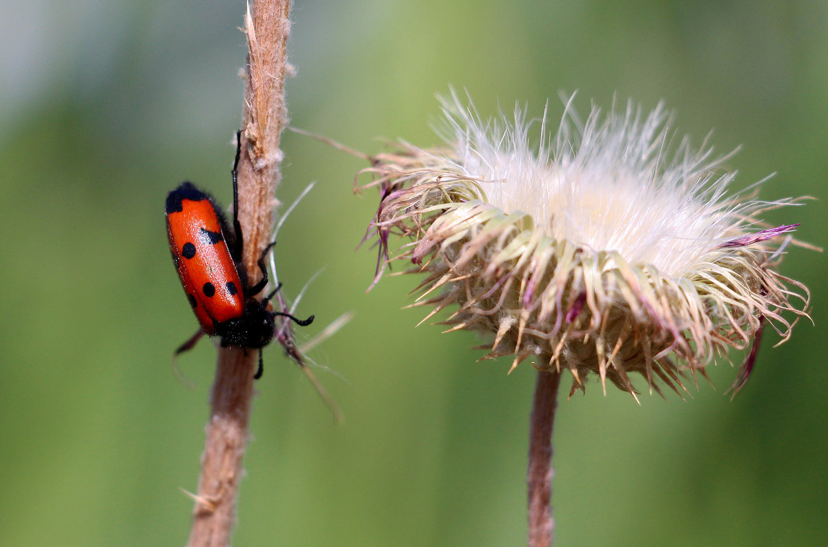 Флора и фауна - Dr. Olver