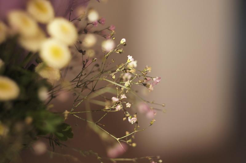 цветы - Дмитрий Тырышкин