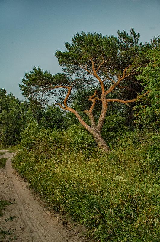 Дерево - Елена Выбиранец