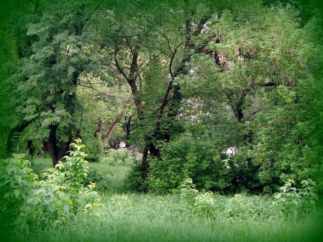 зелёный шум - Галина Флора