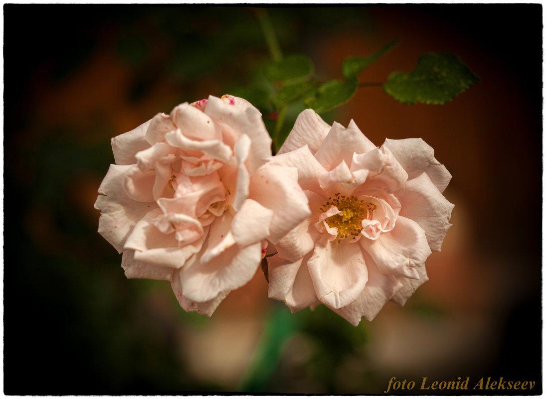 цветочки - Leo Alex Photographer