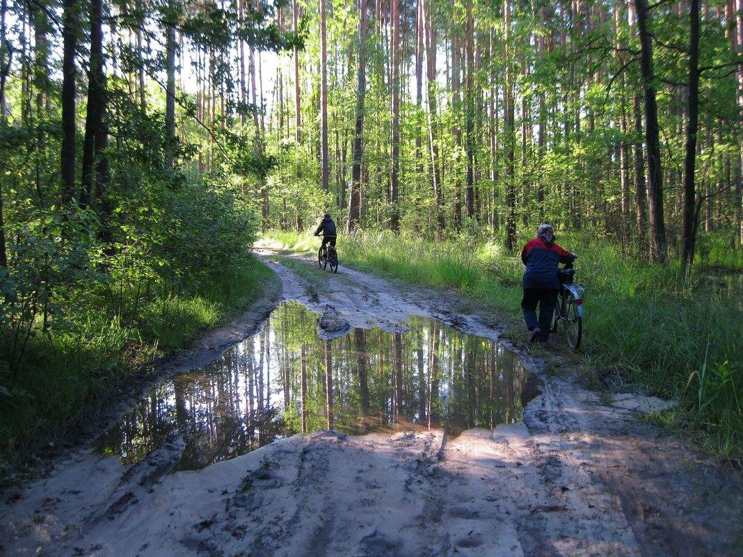 Лесные путешественники - Леонид Корейба