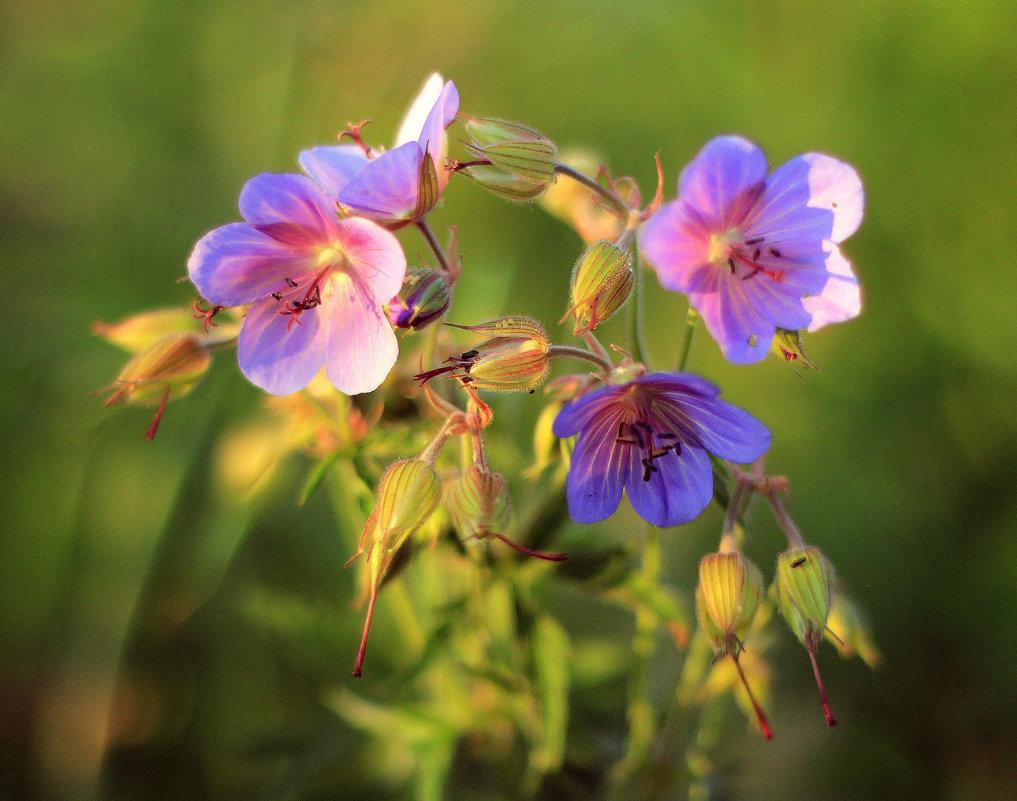 Цветы - Григорий Капустин