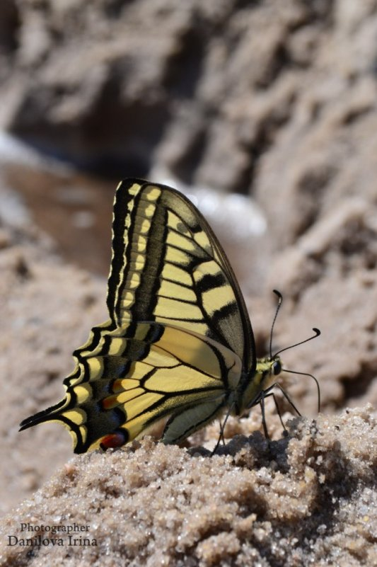 Бабочка - Ирина Данилова