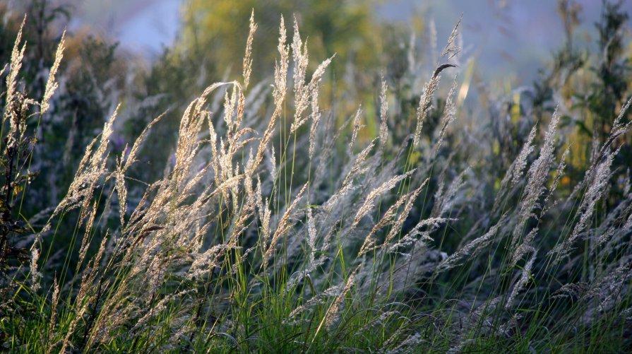 Трава - Наталия Зыбайло