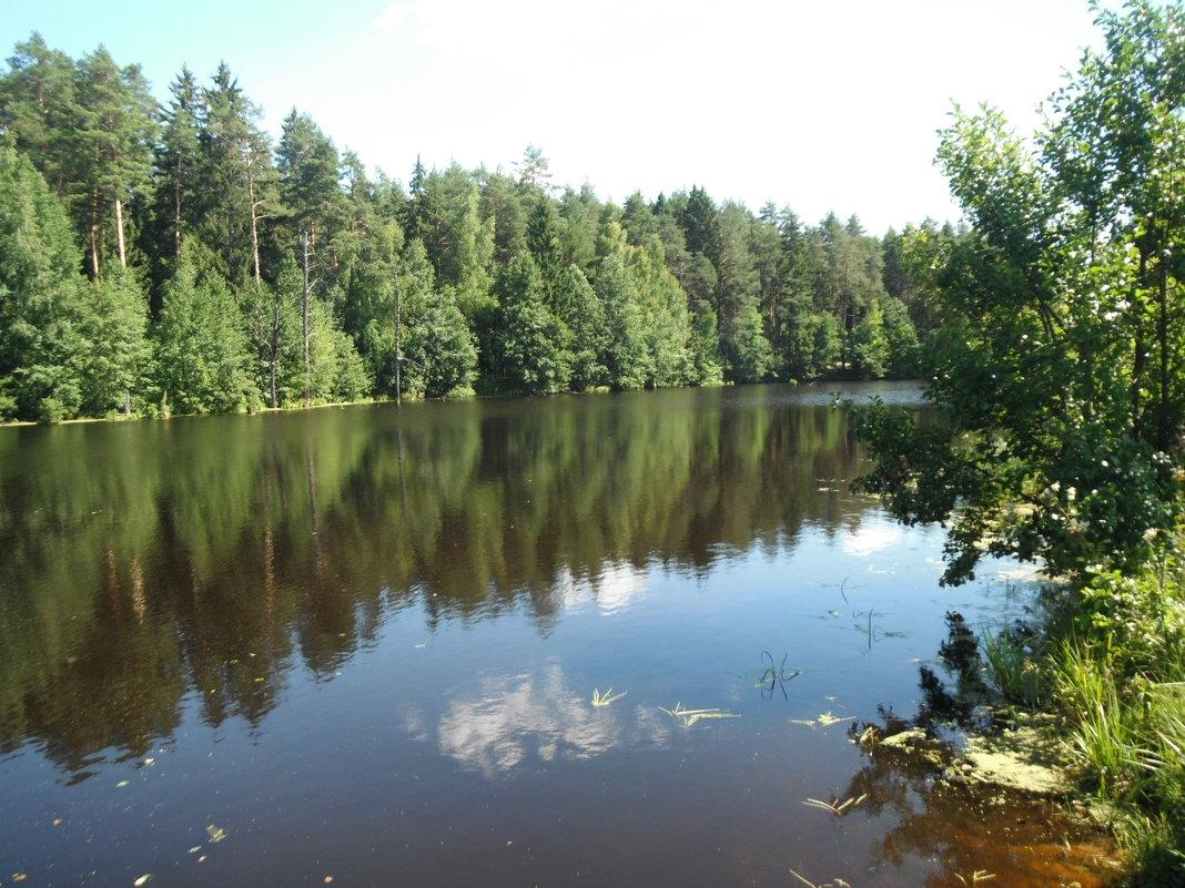 озеро в лесу - нина полянская