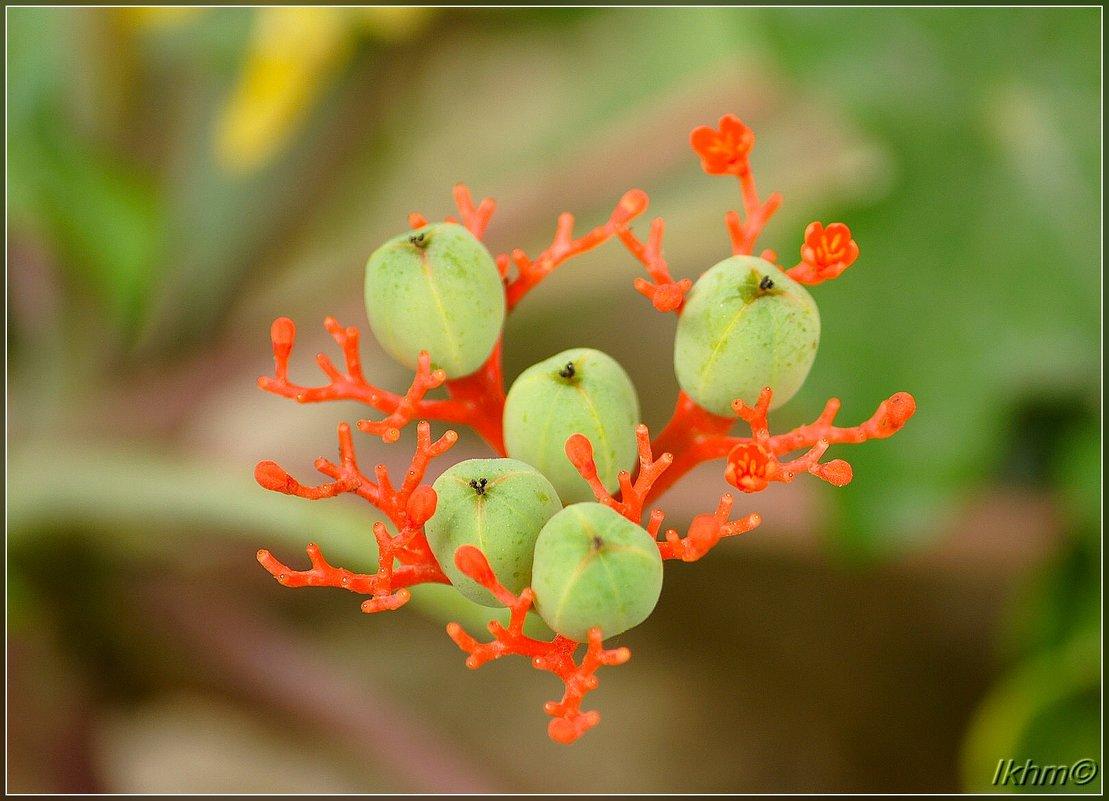 Коралловые цветы и их дети - Igor Khmelev