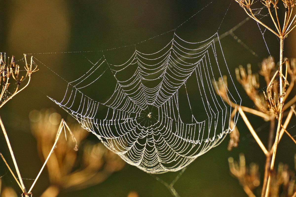 Осень развесила шёлк паутинок... - Irina -