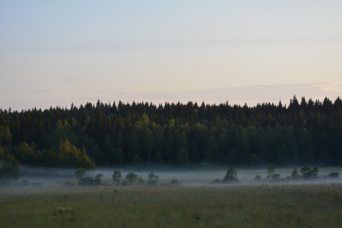 Туман над полем - Ирина Михайловна