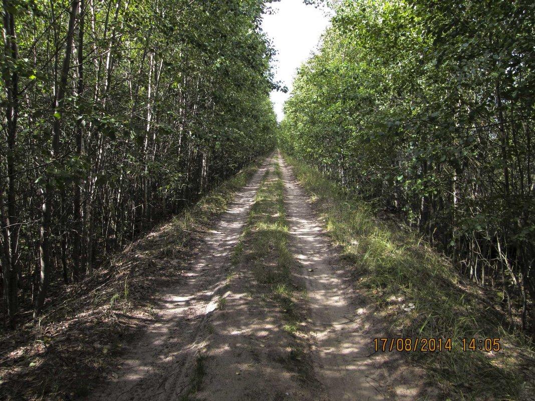 Дорога на торфяники - Алексей Денисов