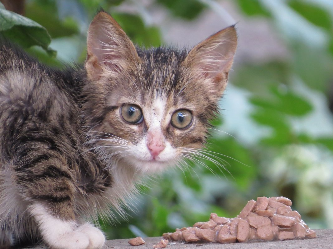 котенок - валя