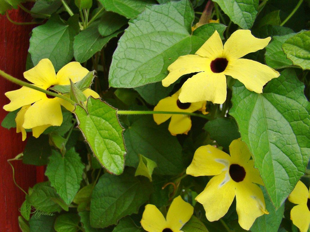 Желтые цветы - ♛ Г.Король