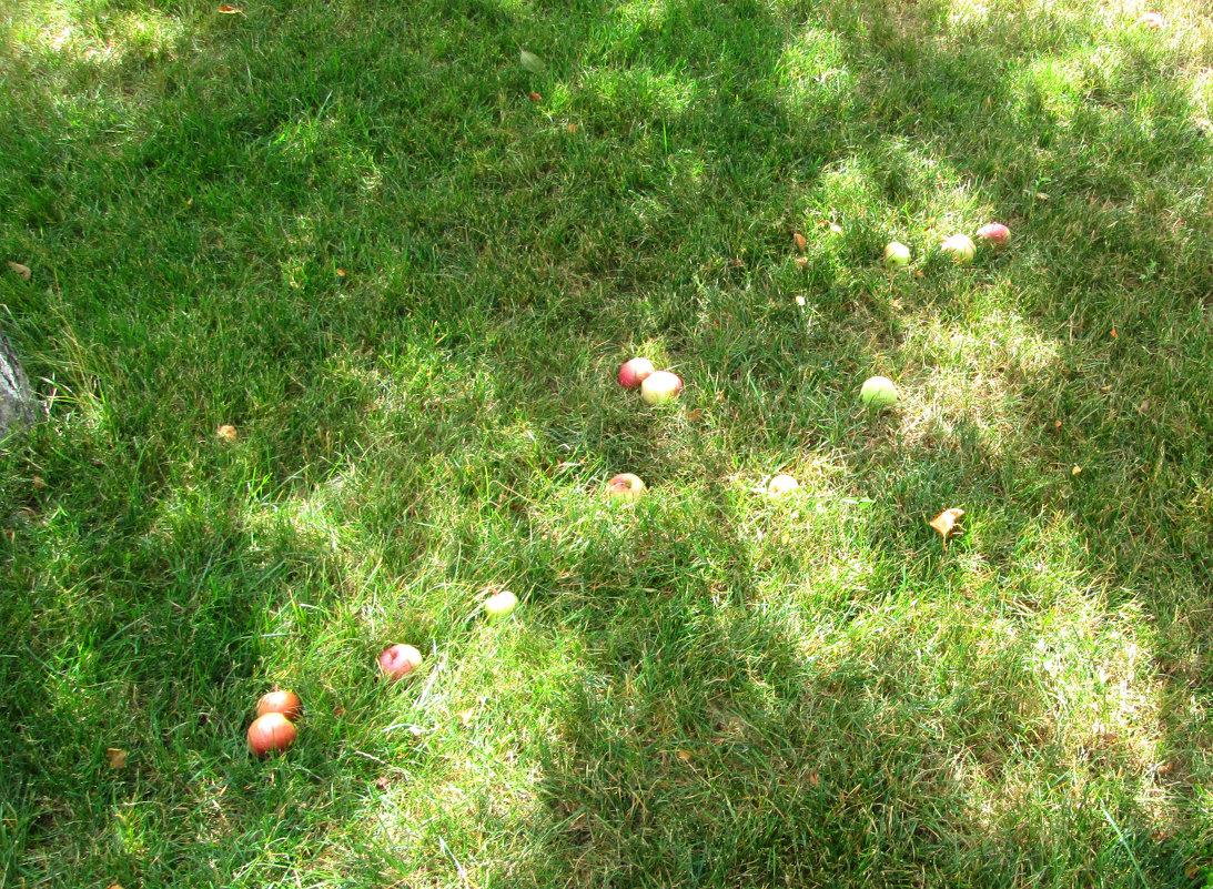 Яблоки от яблони... - Тамара (st.tamara)