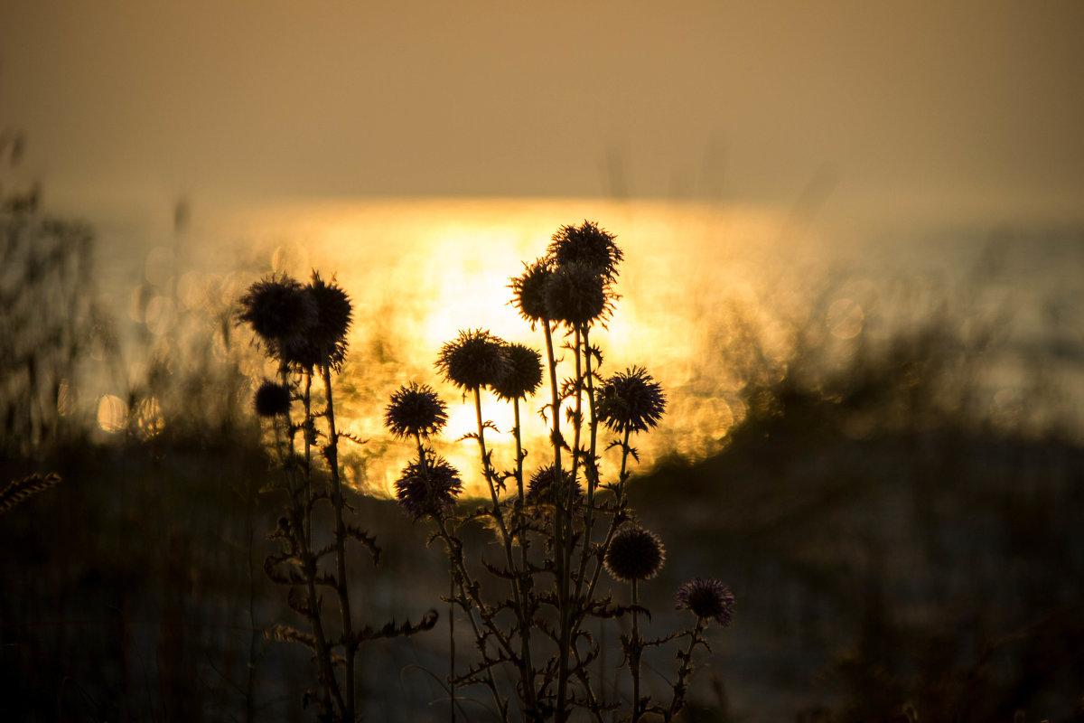 Песчаная растительность - Veronika Mischenko