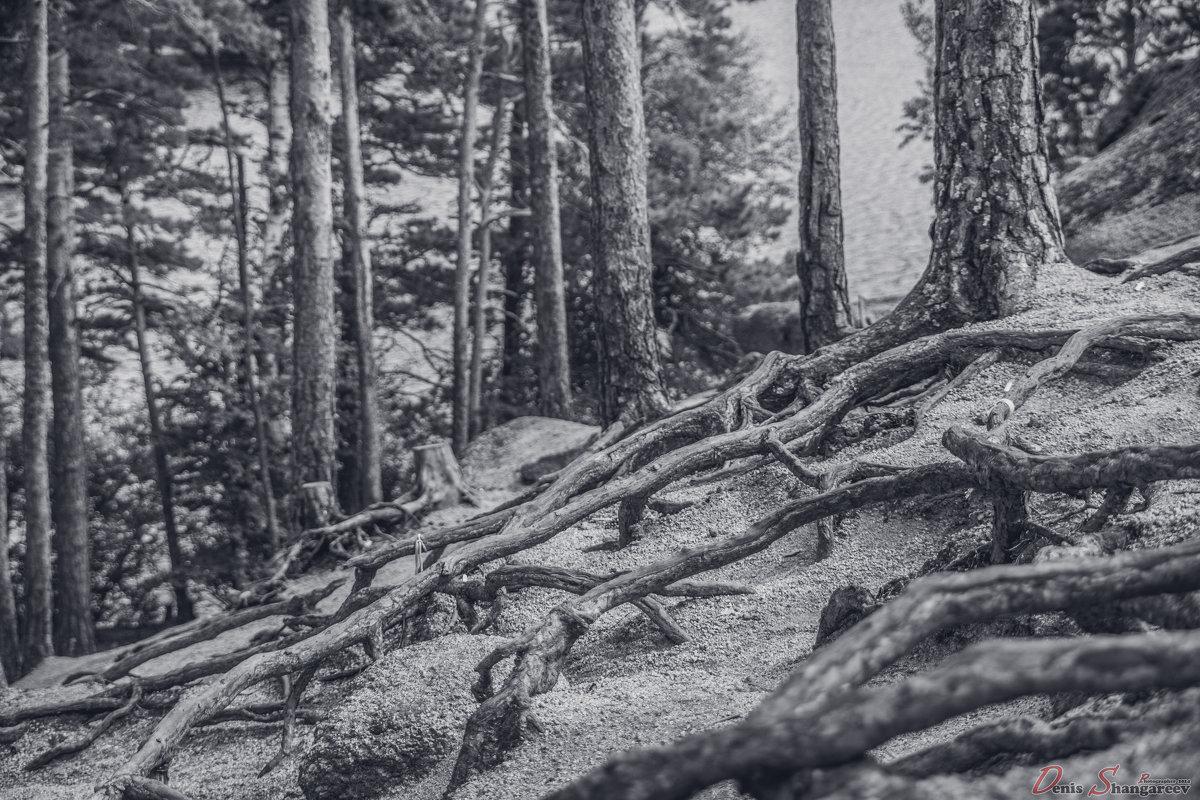 Мистический лес... - Денис Шангареев