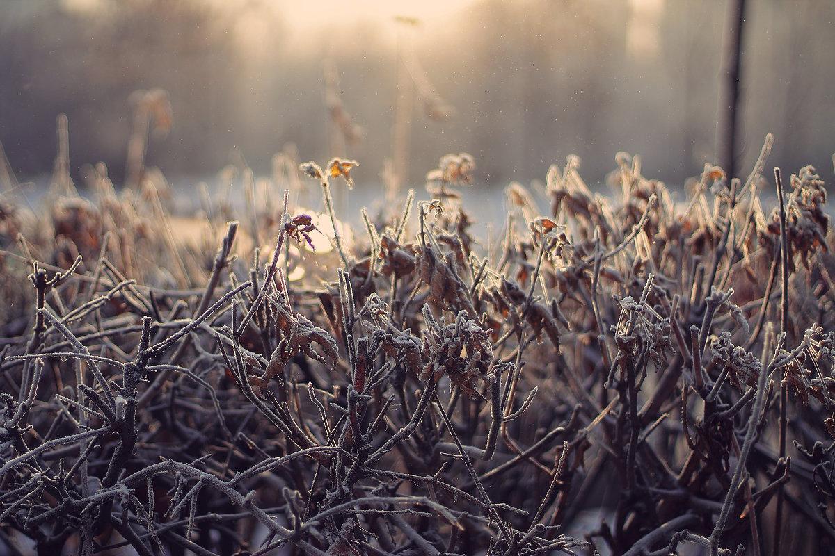 white frost - Екатерина Ландерс