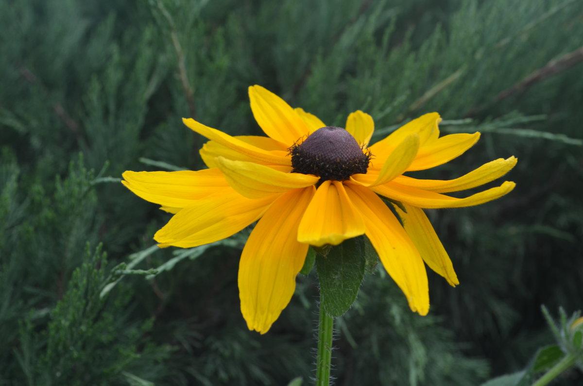 цветок - Никита Сапронов