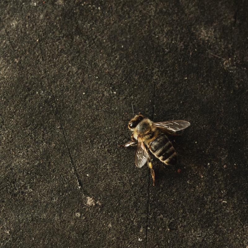 Пчела - Руслан