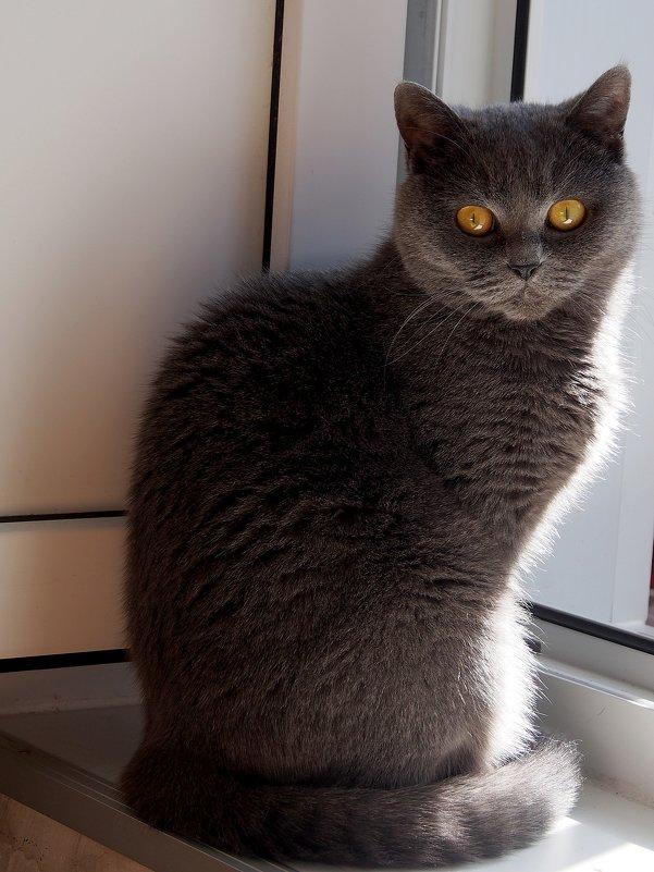 Я за тобой наблюдаю :-) - Татьяна