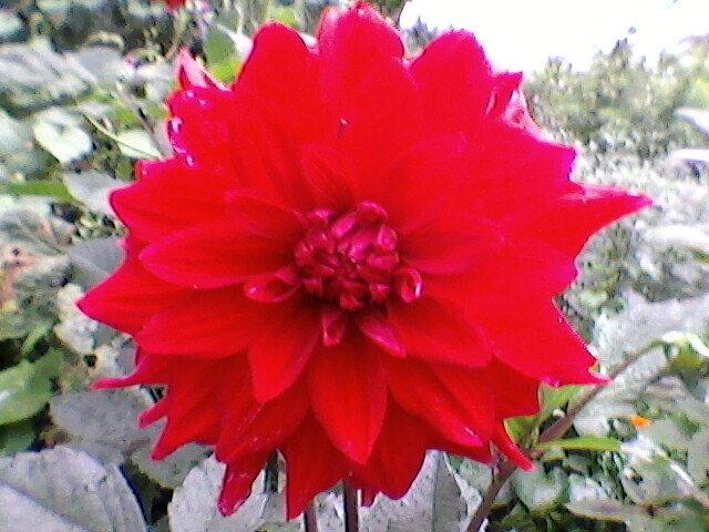 Цветок - Миша Любчик