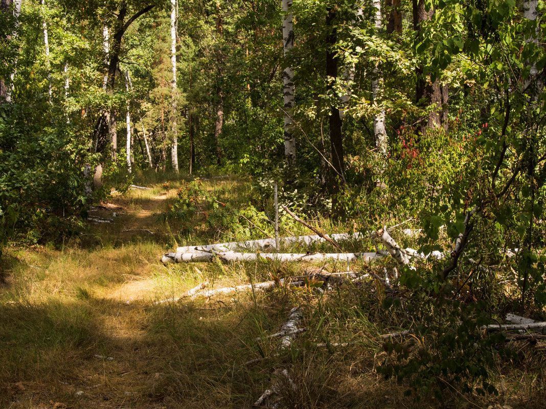 Августовский лес - Виктор