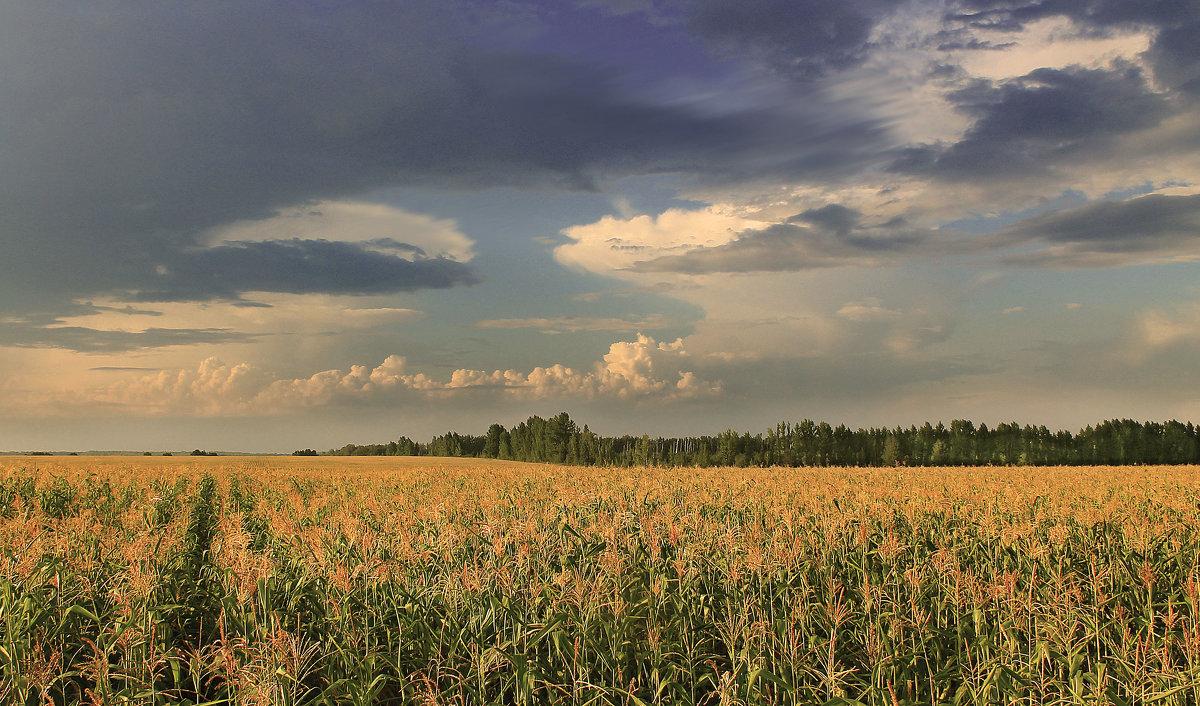 Уходящее лето - Эркин Ташматов