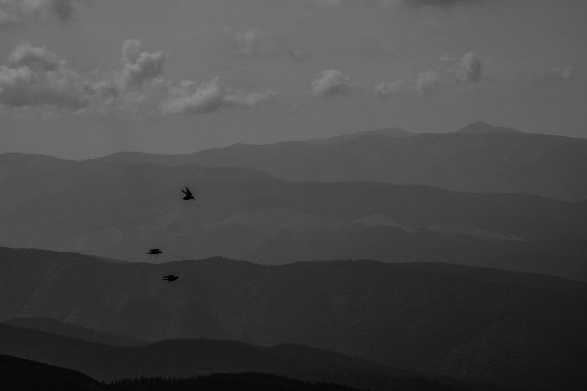 Птицы - Александр Чехановский