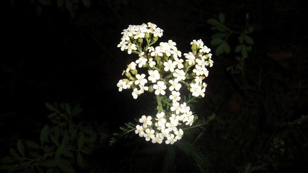 Цветок - Vika Kleinos