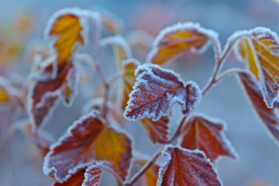 Зимний гербарий - Николь ***