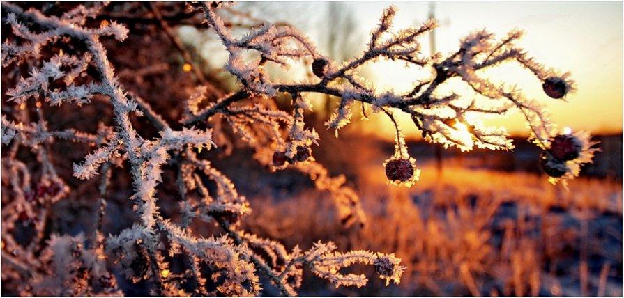 Зимняя вишня - Эмили Скай