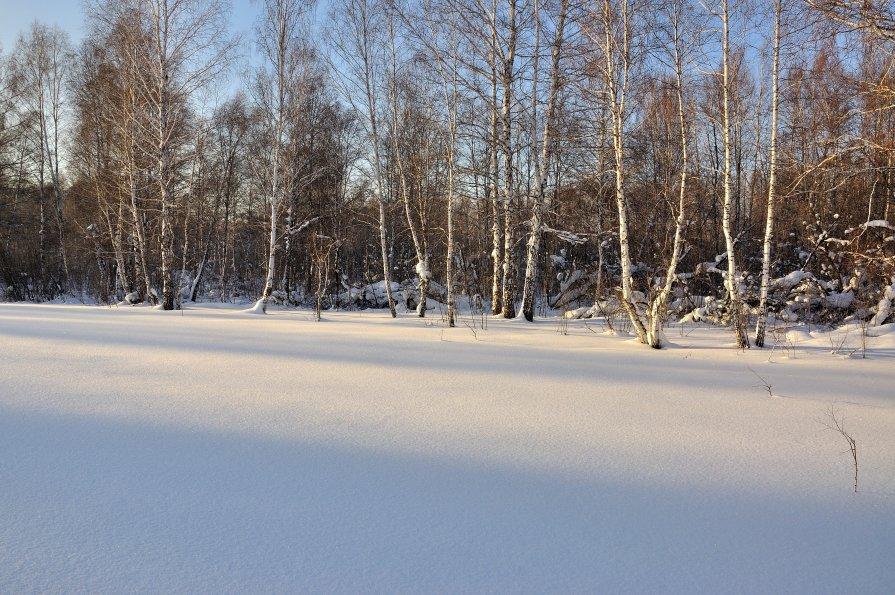 Зимний лес - Николай Мальцев