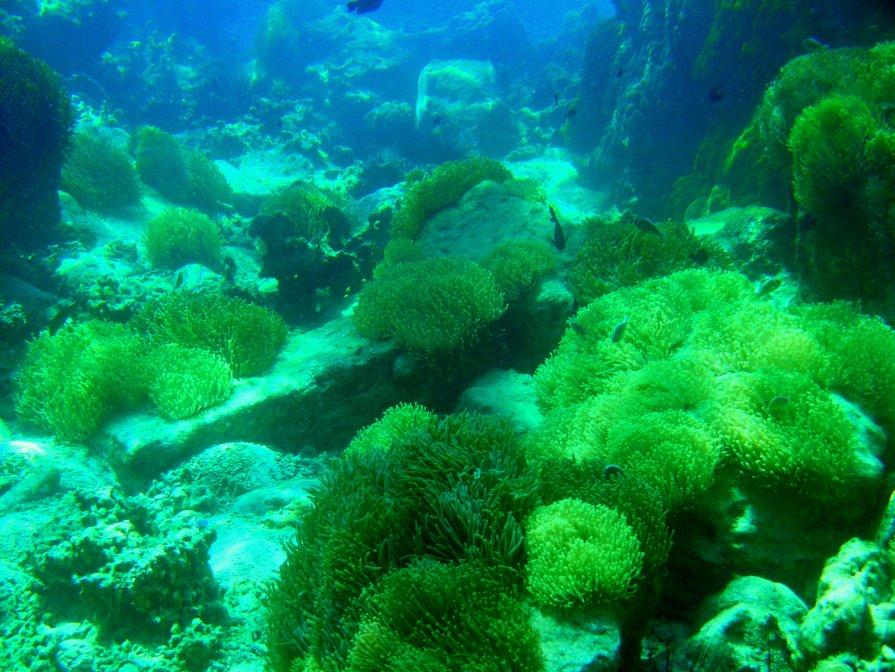 красоты Индийского океана 2 - валерий телепов