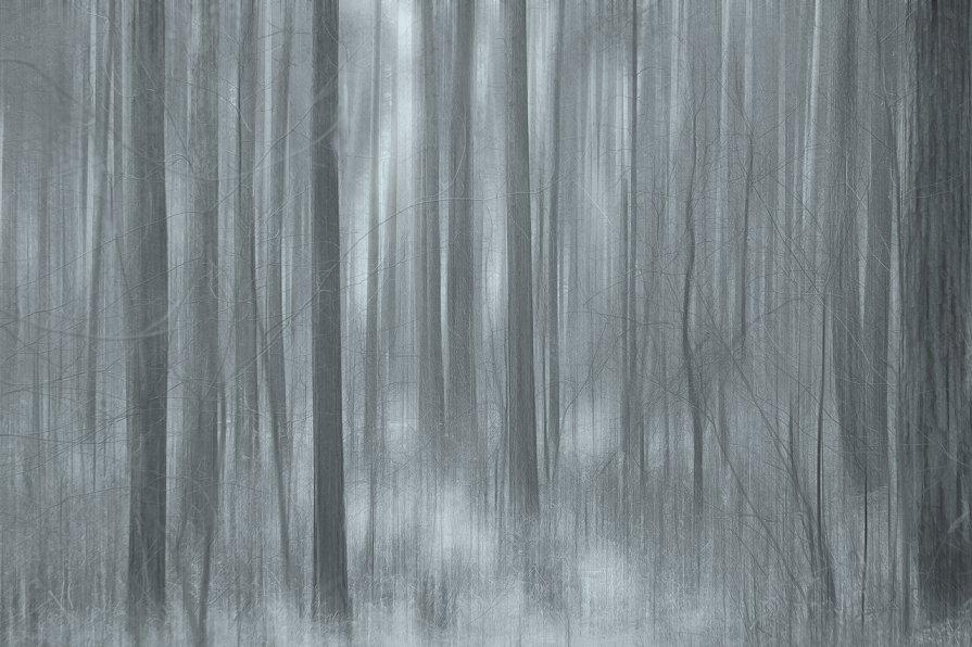 тёмный лес - Алексей Карташев