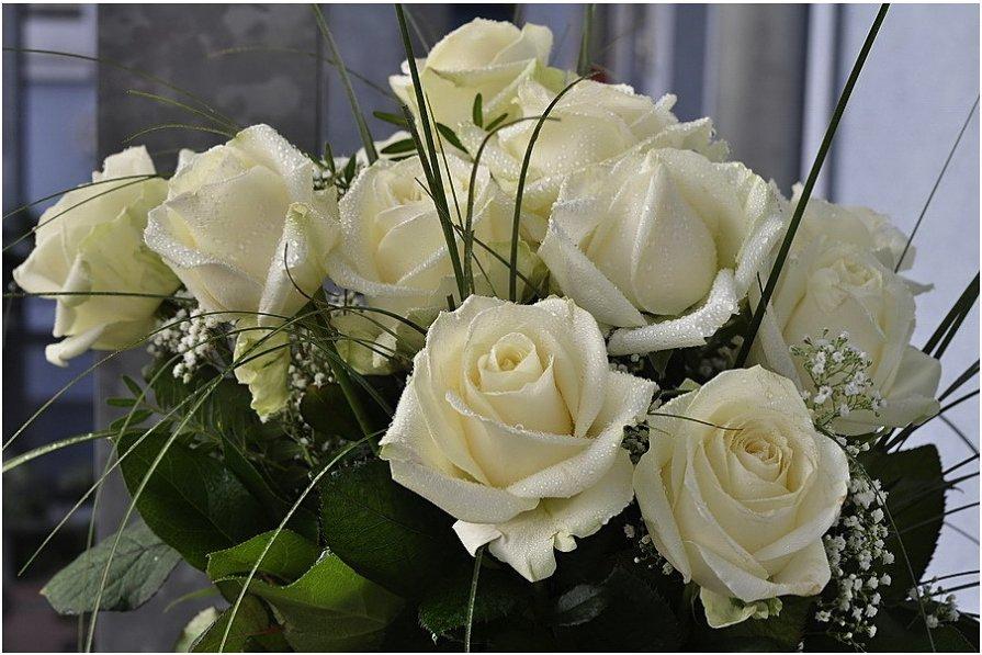 белые розы ласкового мая... - igor G.