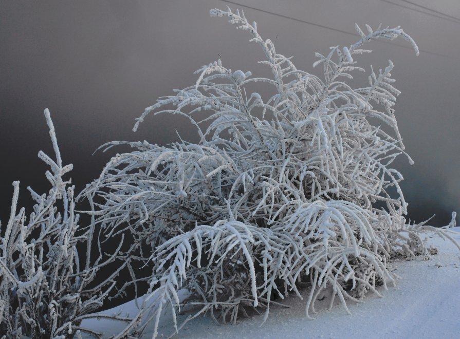 ...холодно..очень холодно... - Елена Медведева