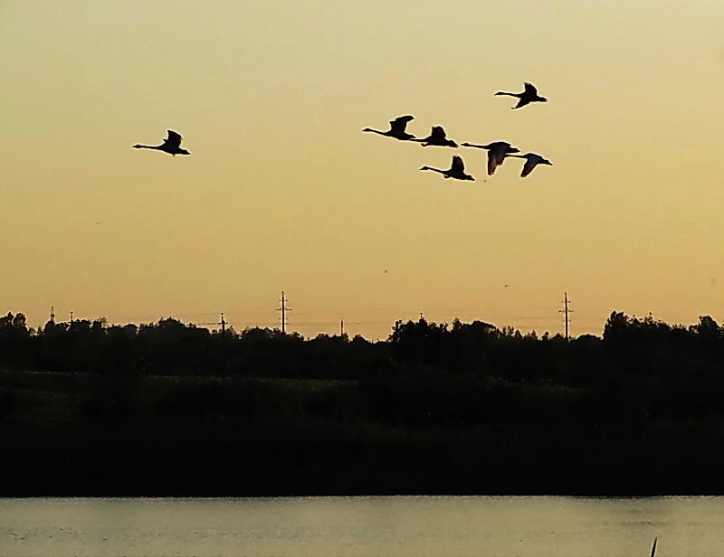 Над землёй летели лебеди - Людмила Минтюкова