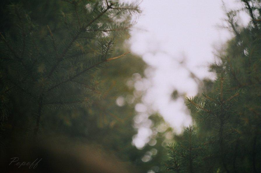 В лесу на опушке - Sergey Popoff