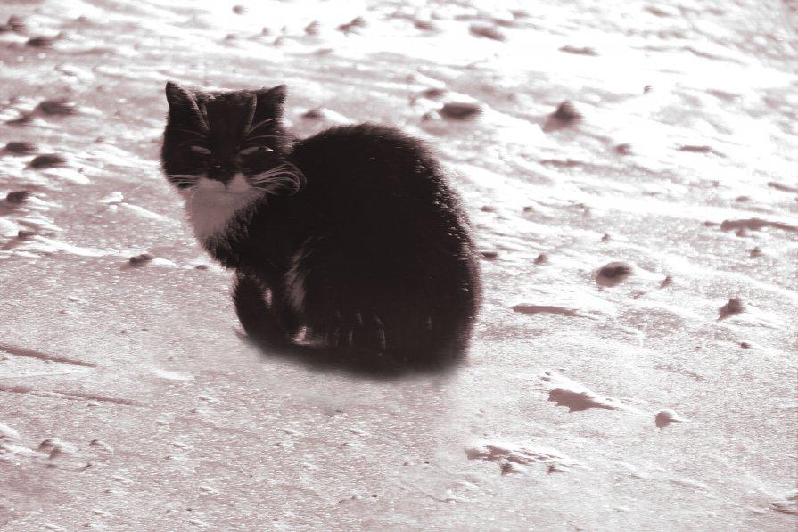 я замерз - Irene Shubina